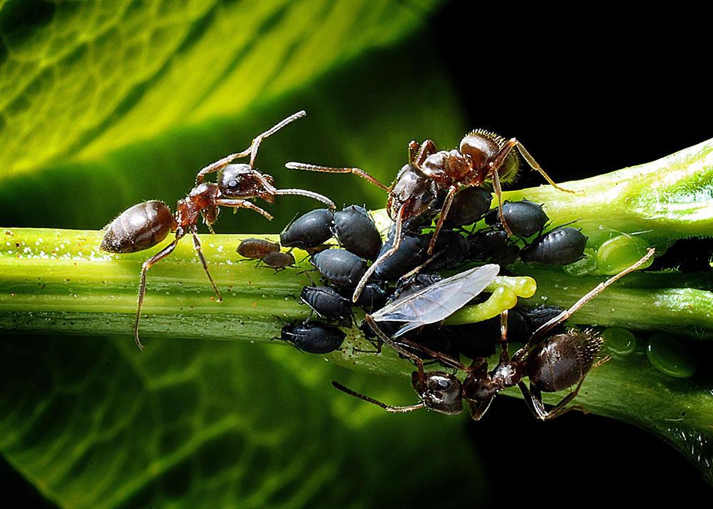 Atelier produits naturels contre insectes < Mons-en-Laonnois < Aisne < Pica