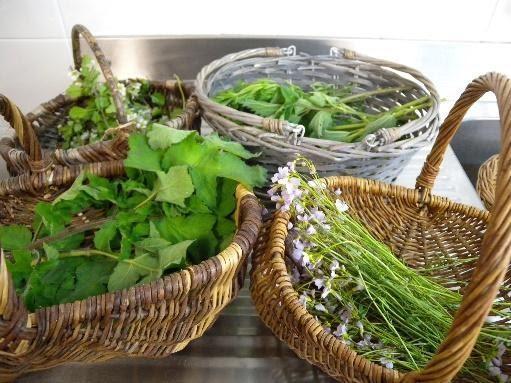 plantes sauvages < Wimy< Thiérache < Aisne < Hauts de France