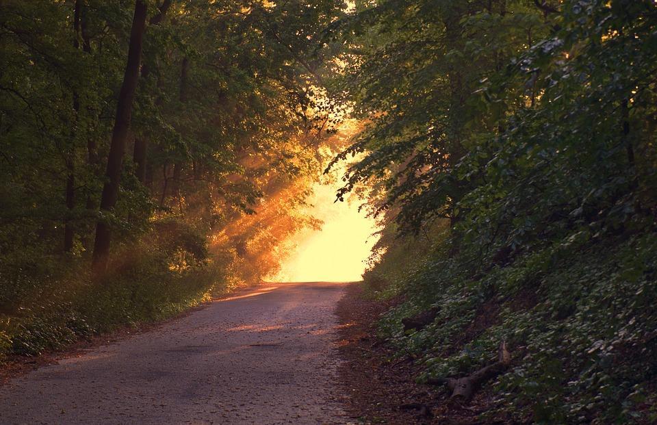 sunlight-166733-960-720