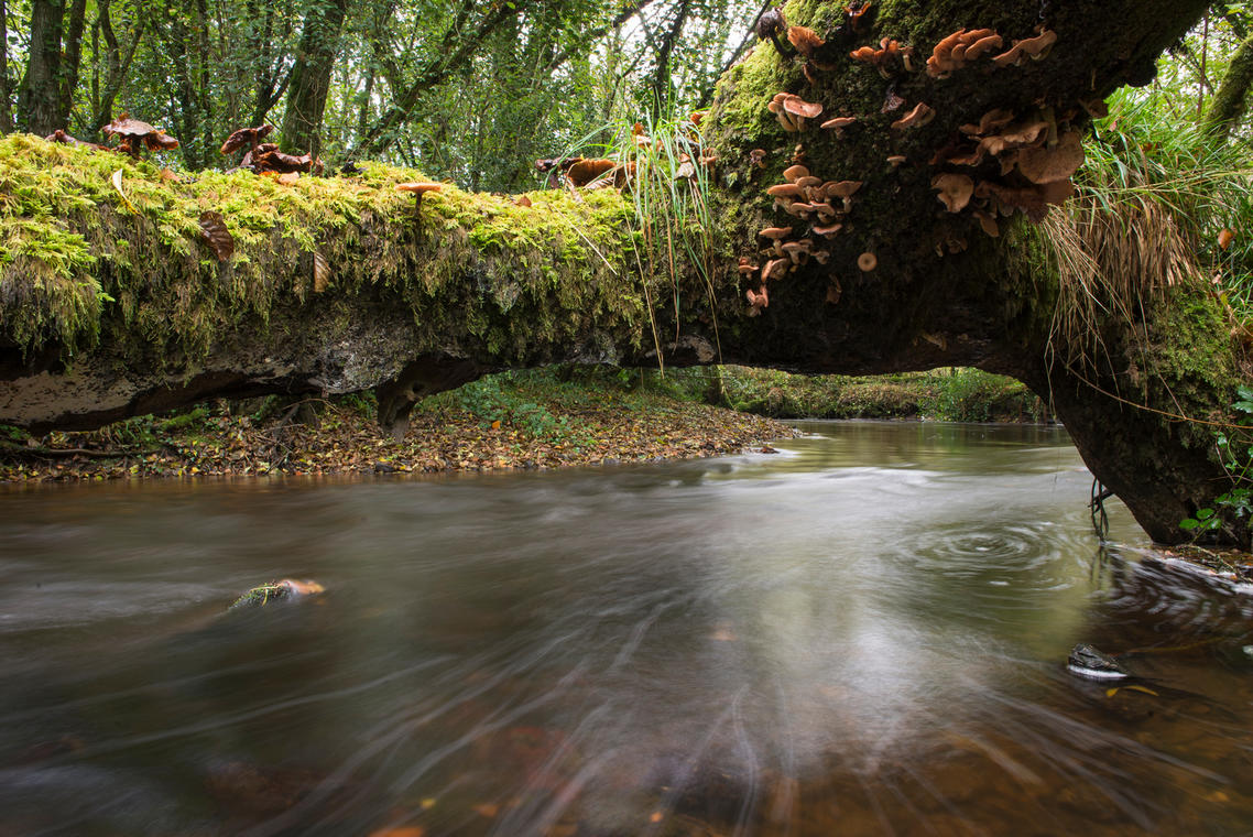 Léguer, riviere sauvage-int © S. Jouon