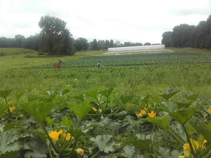 visite de ferme - Gourhert - maraîchage - Ploërmel