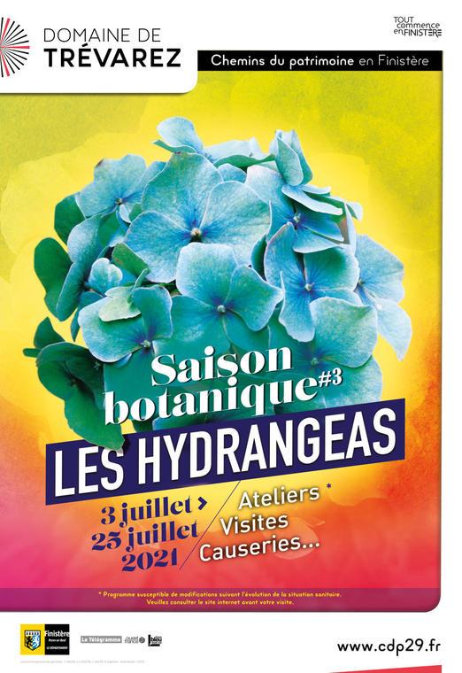 hydrangea-trévarez