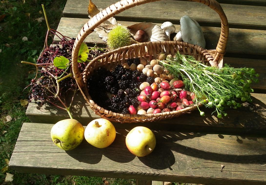 panier cueillette d'automne