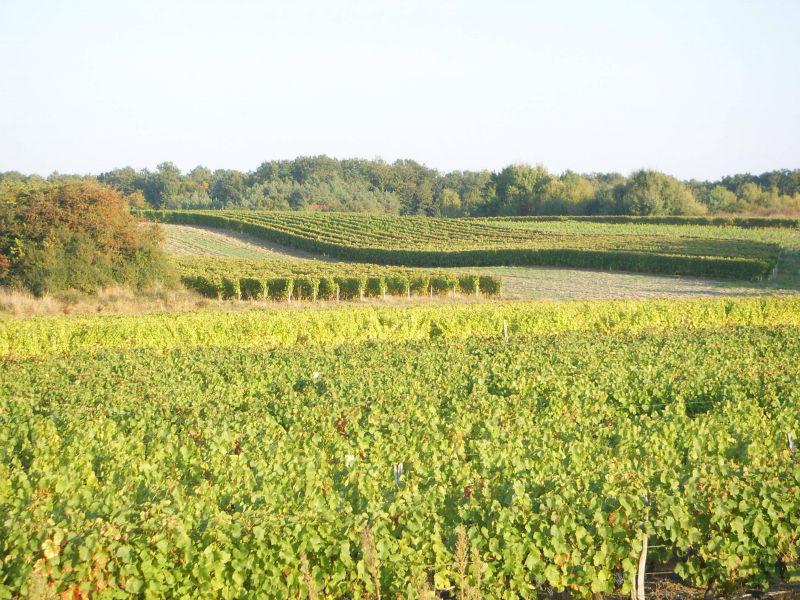 (10)domaine-de-la-renne-st-romain-sur-cher©CDT41-domainedelarenne