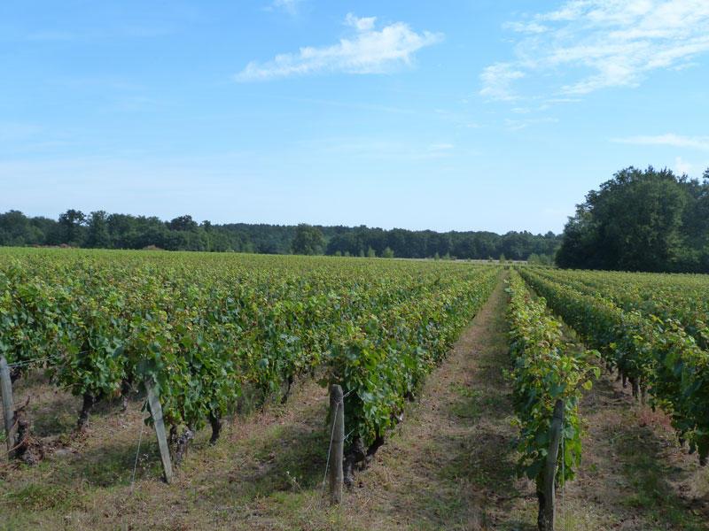 (2)vigne-en-loir-et-cher©CDT41-cbeulle2012