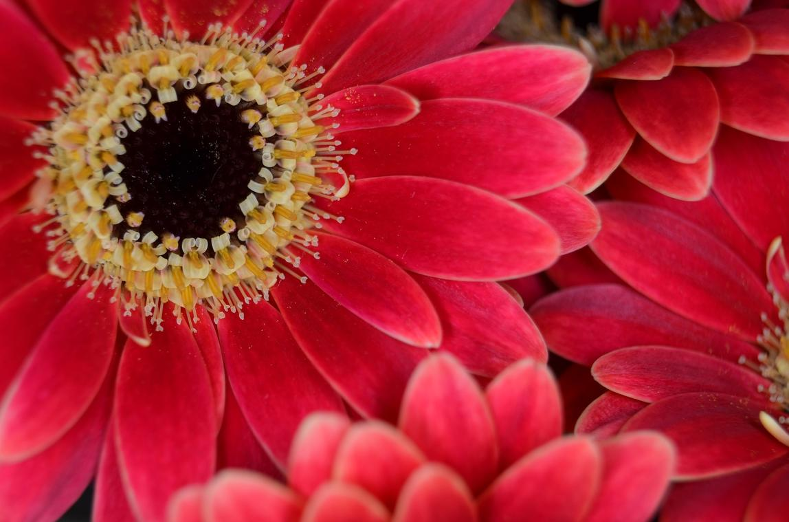 Floralia - Artisan Fleuriste à Vendôme