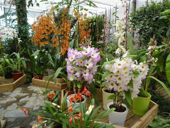 loisirs_orchidium_fresnes
