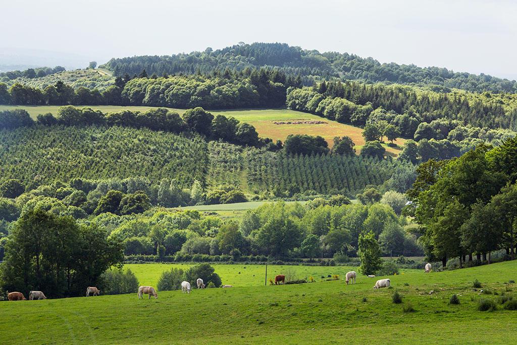 Mont-Rochard