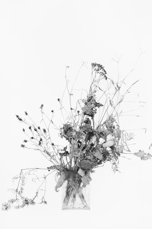 """© Anne-Lise Broyer """"Le Chant de la phalène (Oraison)"""" 2020"""
