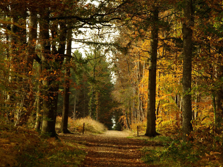forêt-de-combree-49-pna