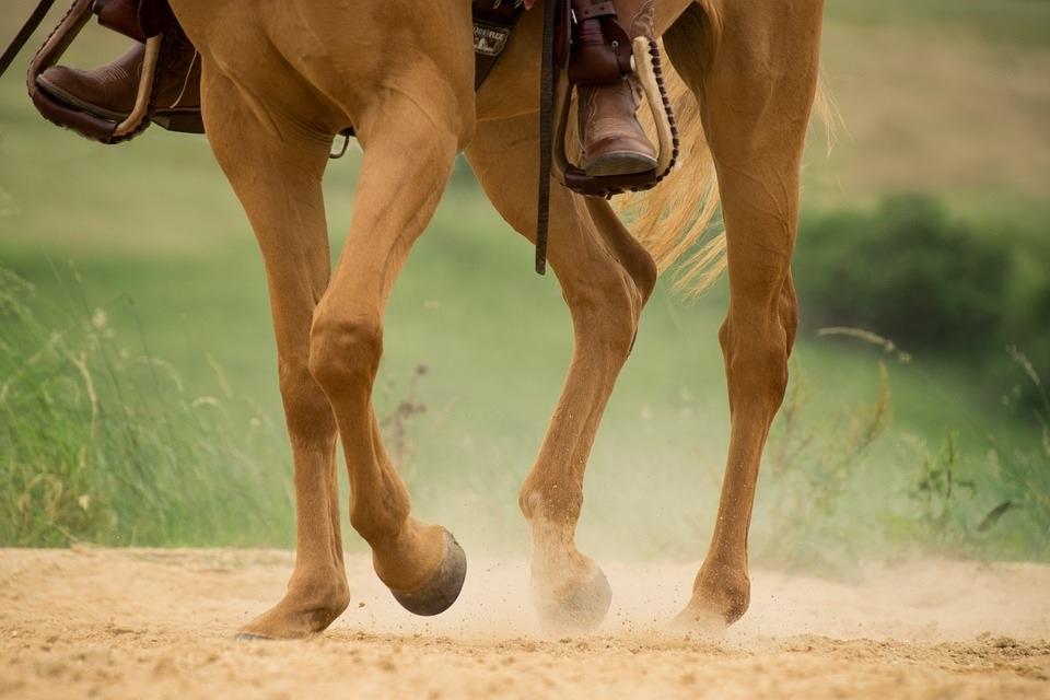 @pixabay_cheval