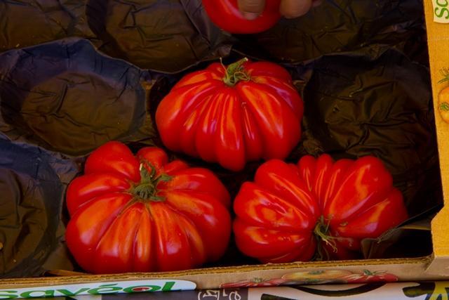 tomates©OTVD-V.Bouvier.0617 2 - ©_ OK