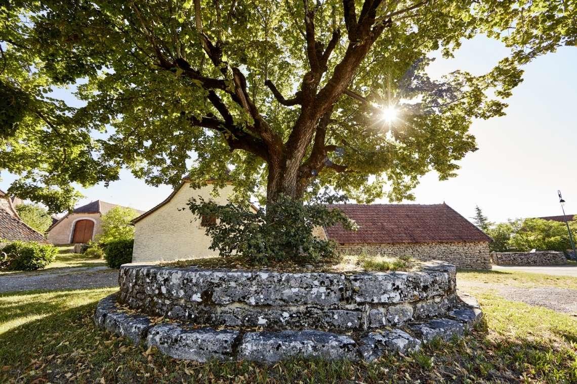 arbre@departement du Lot