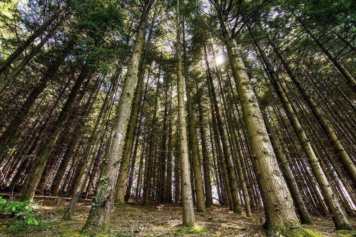 exposition éphémère « Chez nous, la forêt »