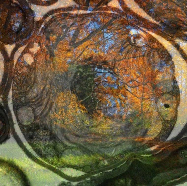 Cellulaire 7 Tirage photographique impression pigmentaire 25 x 25 cm, 2020