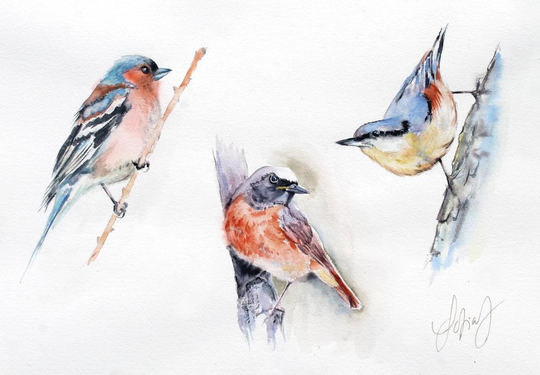 les oiseaux@S.Johannissen