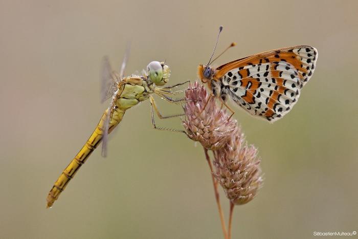 libellule et papillon @sebastienmulteau