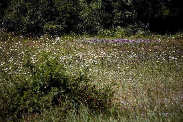 paysage fleurs département lot