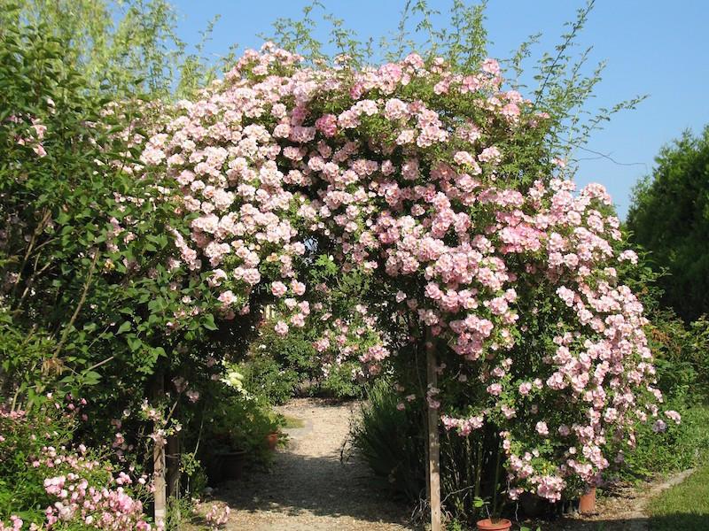 Le Parc Fleuri-Marson