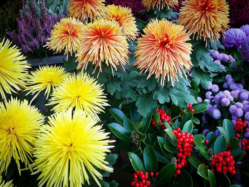Fleurs 800