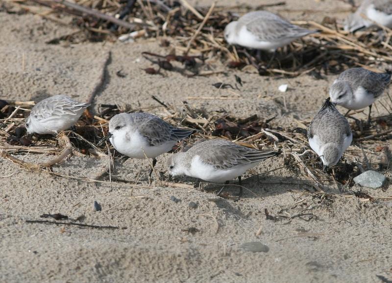 Les oiseaux de la plage