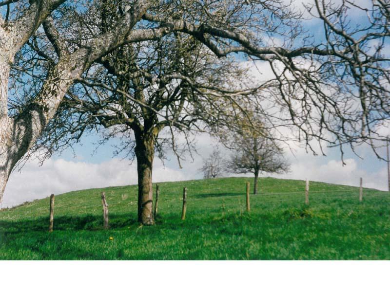 Motte castrale du Châtellier - Rémalard