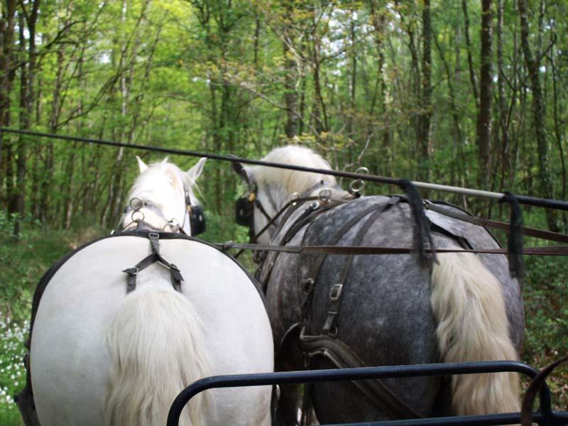 Attelage de l'élevage du Verger - Origny le Butin