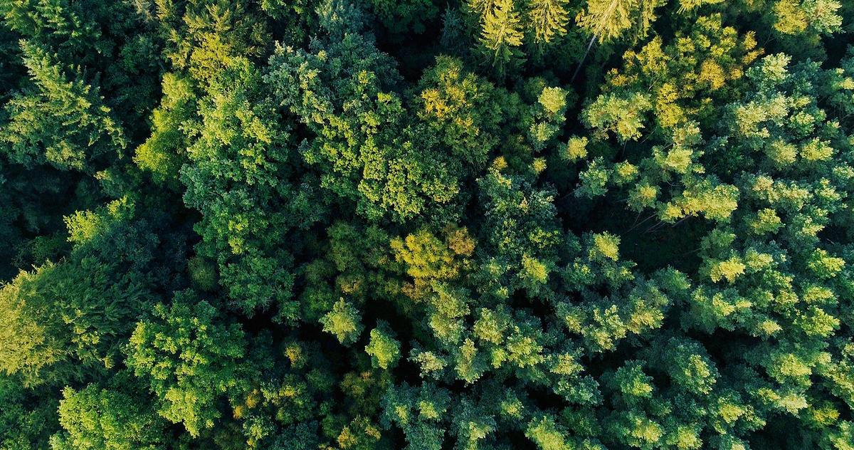 bagnoles-orne-foret-andaines-nature-arbre-vue-ciel