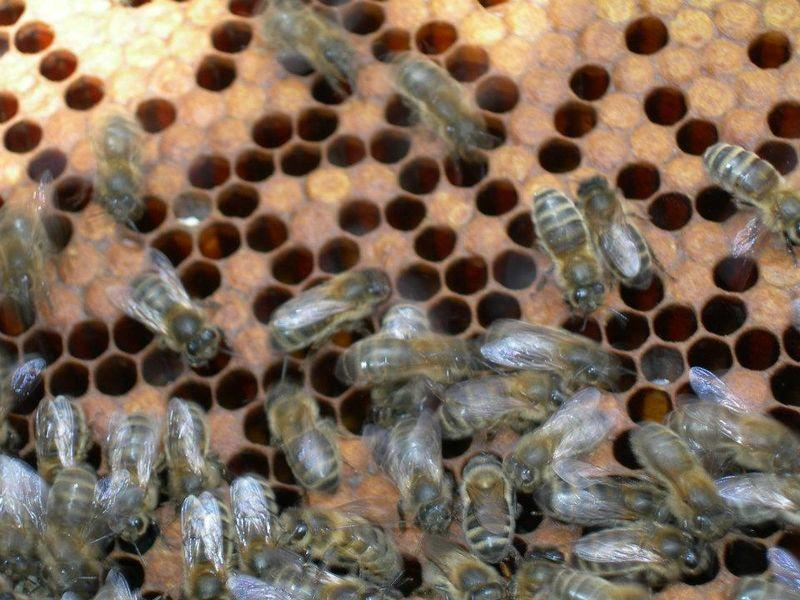 ecomusee_apiculture11_800