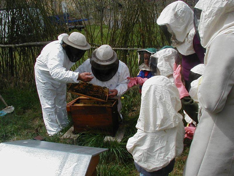 Fête de l'abeille