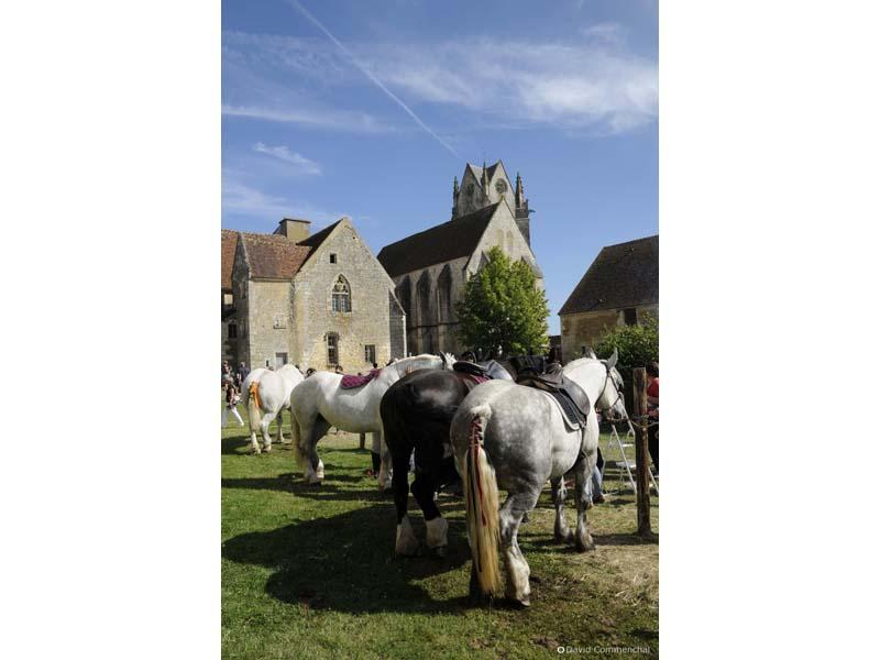 Fête du cheval percheron - St Cyr la Rosière