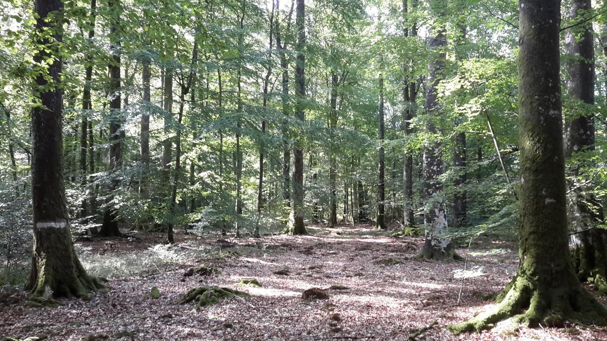 forêts (4)