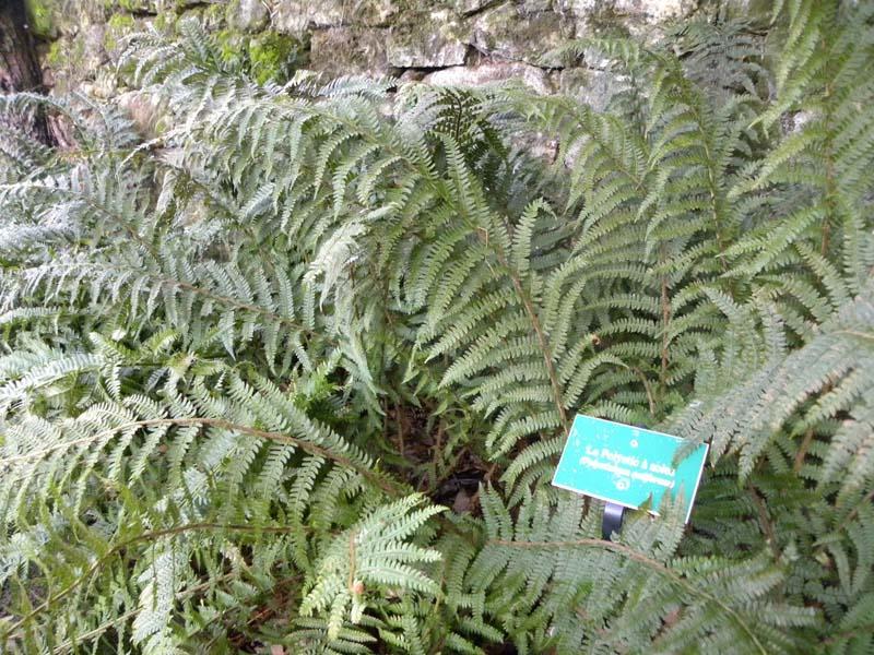Jardin botanique - La Perrière