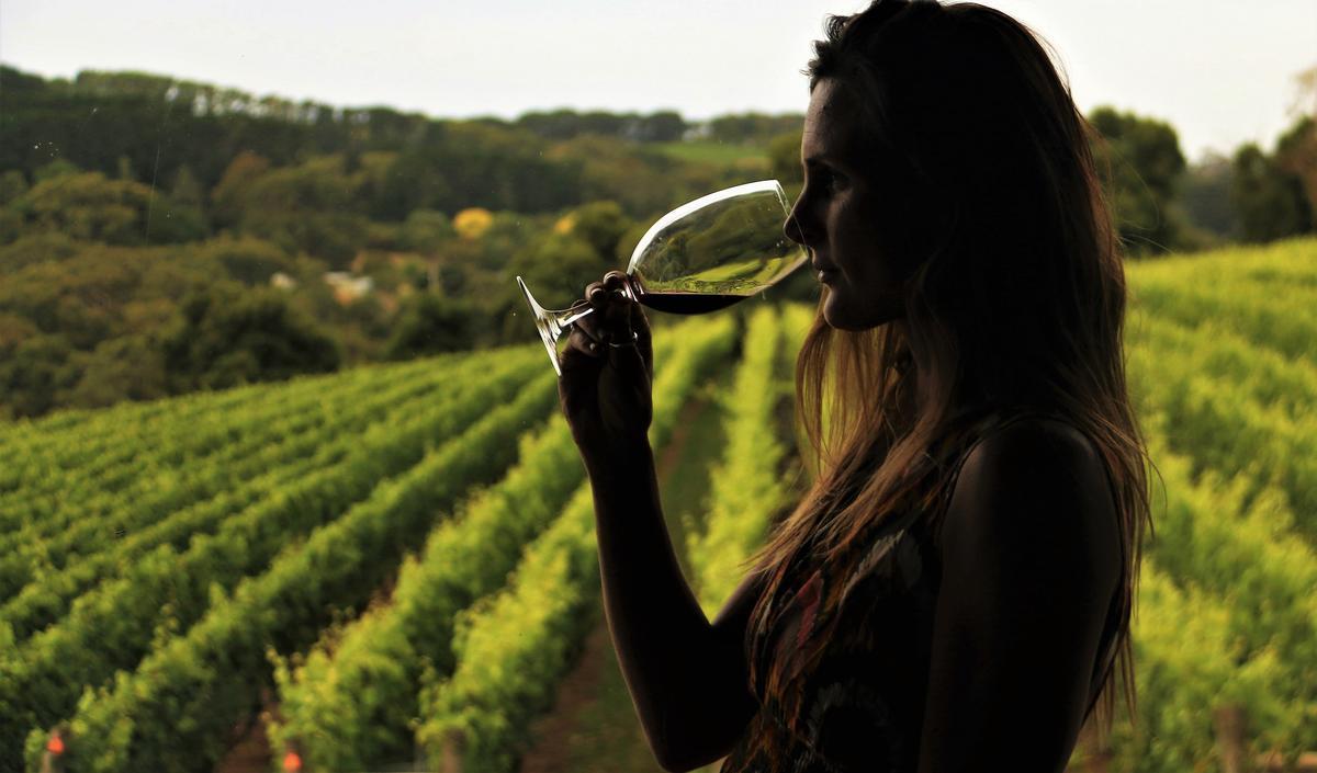 Vignoble et dégustation (photo non contractuelle)