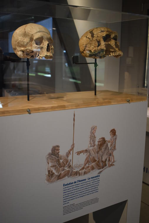 """Visite """"De la rencontre entre Néandertal et Sapiens"""" - Musée de Préhistoire"""