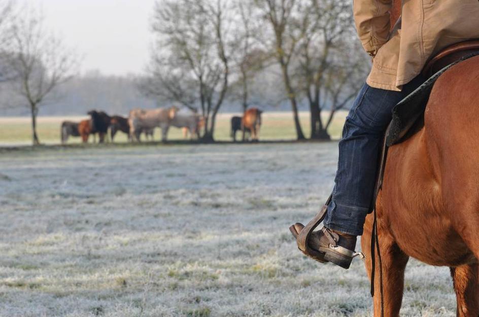 Equitation-western-Thomas-ranch-Contigné-LOI-49