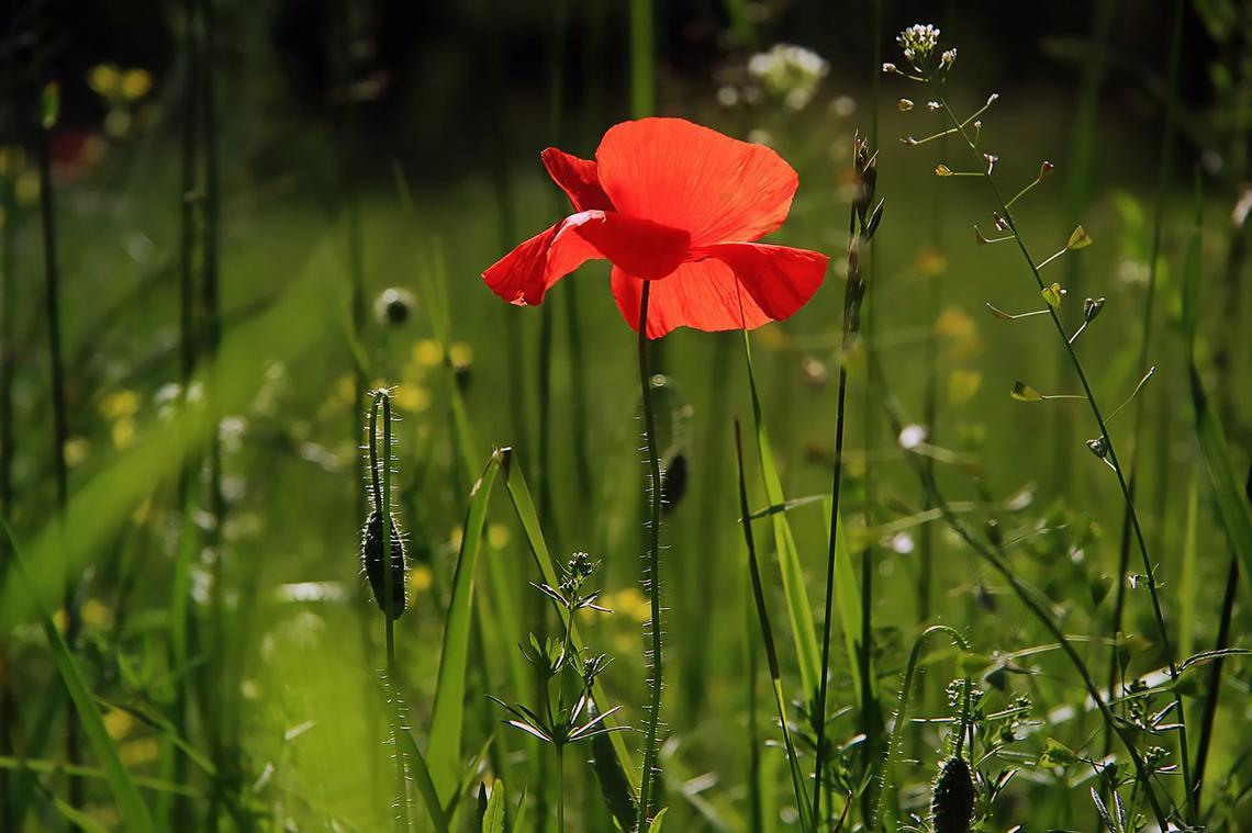 Randonnee---Nature---Pixabay--9-
