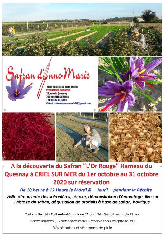 103120 - CRIEL - Visite Safranière