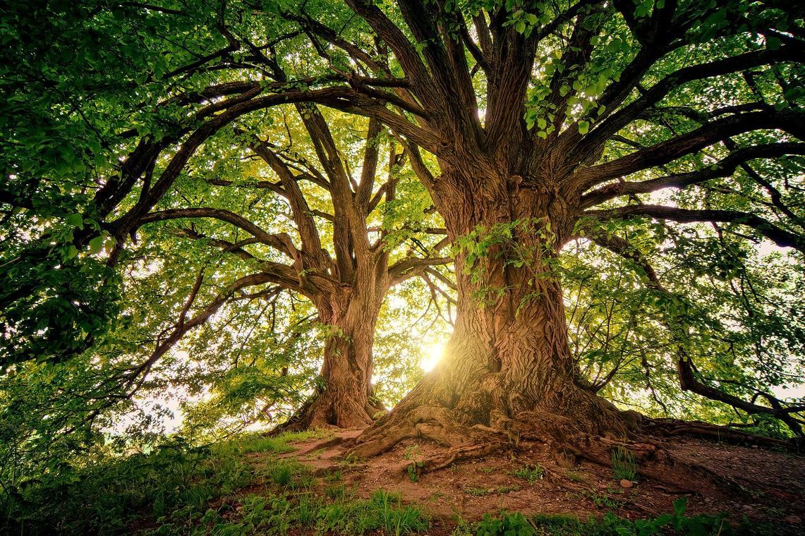 Arbre - forêt