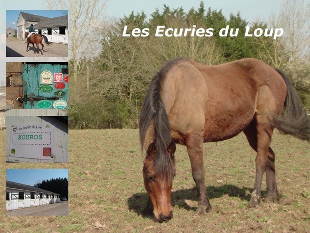 LOI-ecuries-du-loup-4