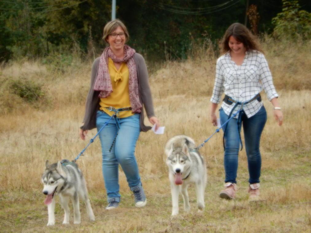 cani-rando-huskies d'anjou