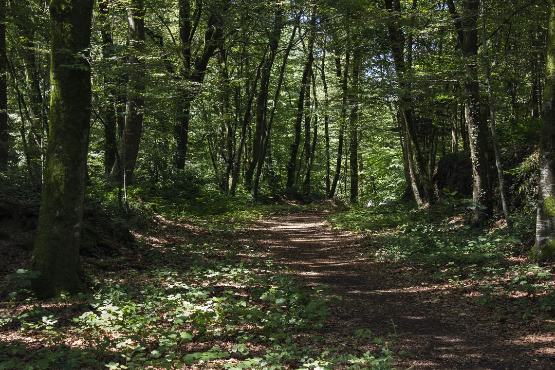 PONTMAIN--Entre Glaine et Futaie randonnée