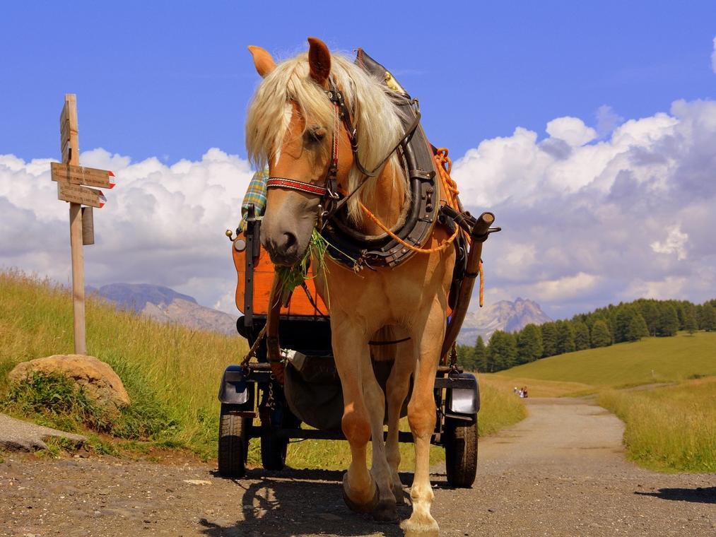 Calèche cheval