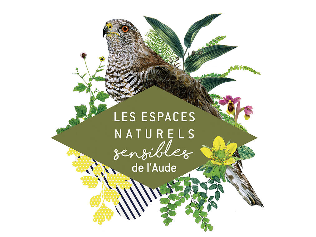 ENS-faucon