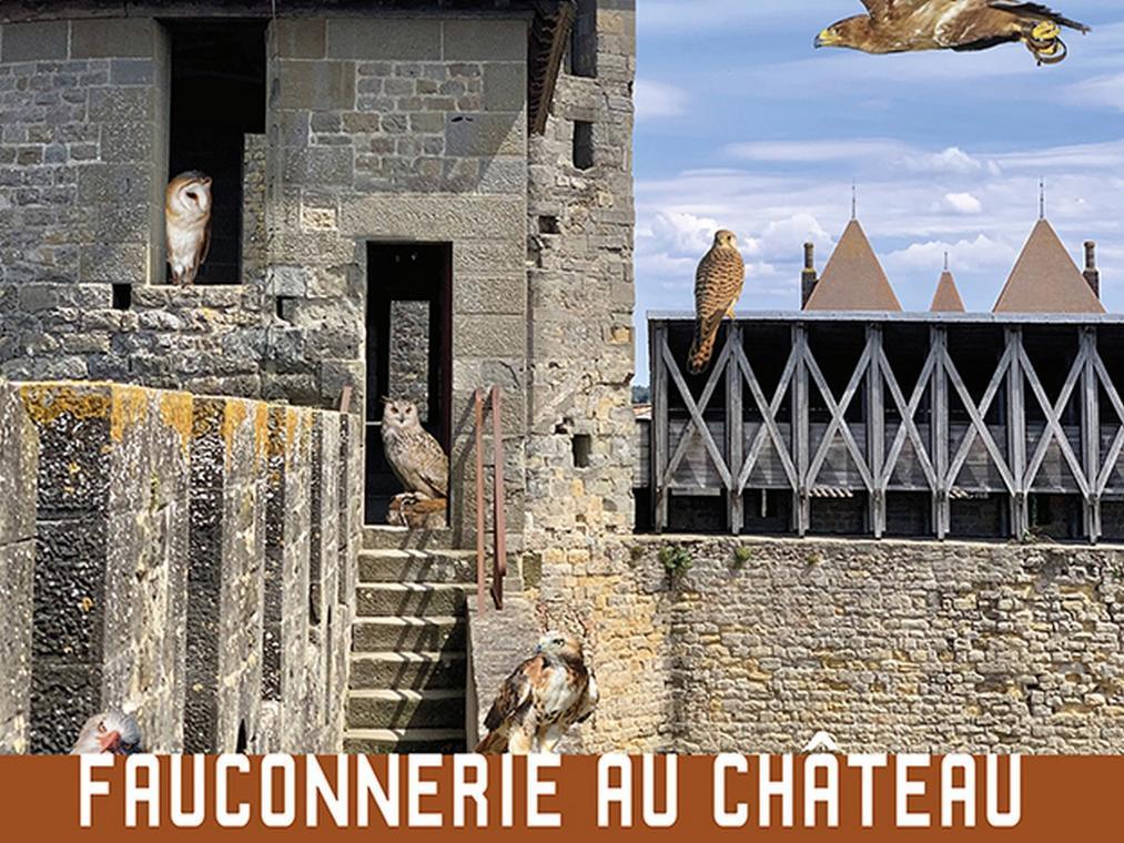 FAUCONNERIE AU CHATEAU