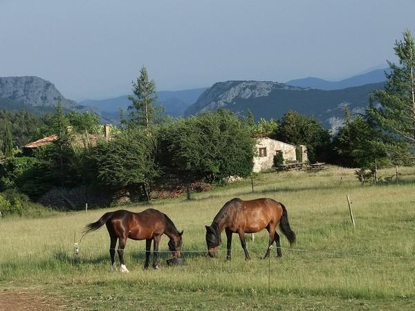 Pferde vor Gite 2