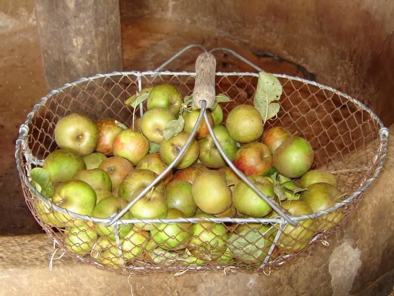 Panier de pommes © V Hublin