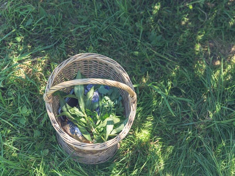 Aux_bonnes_herbes_Cuisine_des_plantes_sauvages