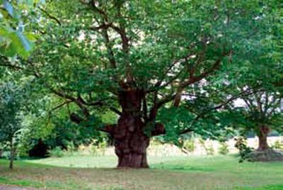 Arbre remarquable PG
