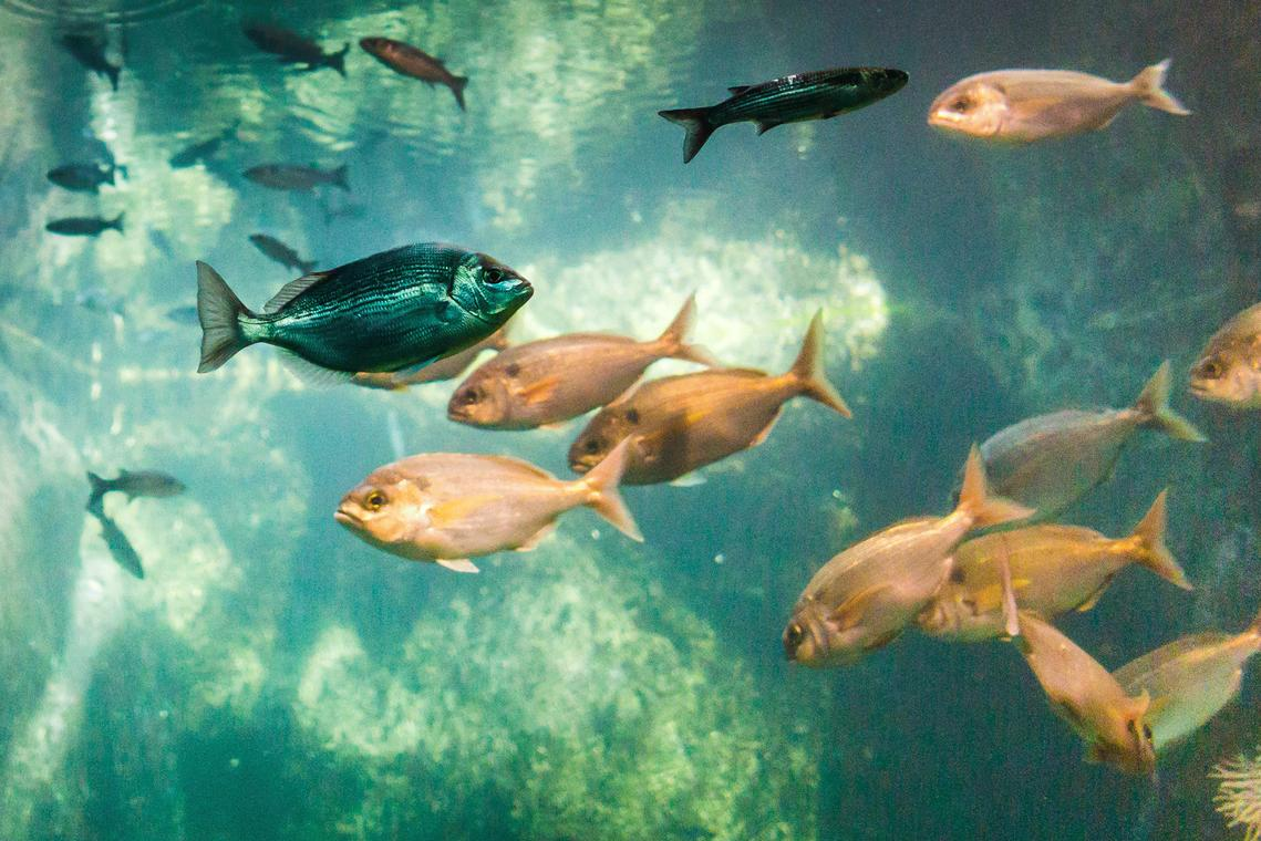 L'Oeil-de-Paco---Aquarium-de--Trégastel---LTC_web